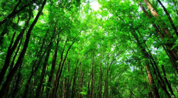 filipinas florestas entre as florestas mais ameacadas do mundo
