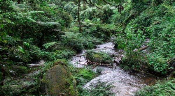 florestas costeiras da africa oriental entre as florestas mais ameacadas do mundo