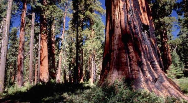provinvia floristica da california entre as florestas mais ameacadas do mundo