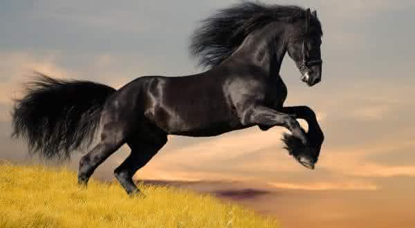 Top 10 raças de cavalos mais caras do mundoa