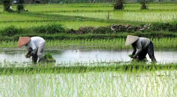 china entre os maiores paises produtores agropecuarios do mundo