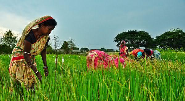 india entre os maiores paises produtores agropecuarios do mundo