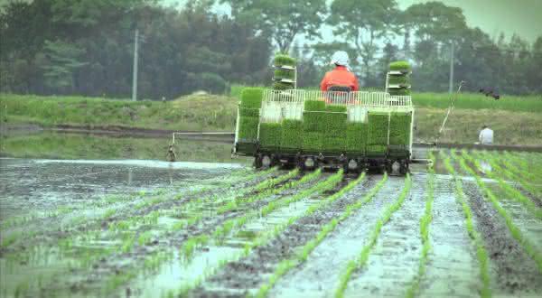 japao entre os maiores paises produtores agropecuarios do mundo