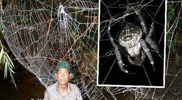 Seda da aranha entre os materias mais fortes do mundo