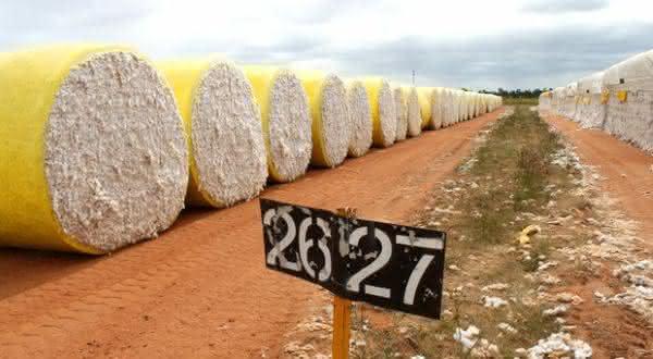 Australia entre os maiores paises produtores de algodao do mundo