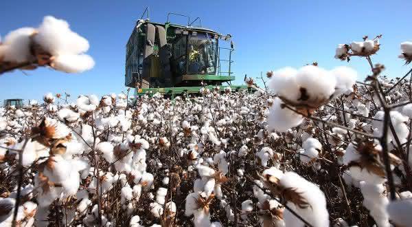 china entre os maiores paises produtores de algodao do mundo