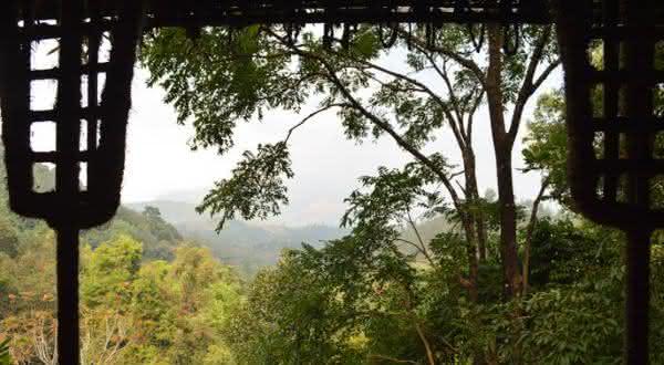 india entre os países com maior área de floresta do mundo
