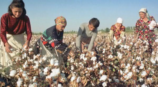 turcoministao entre os maiores paises produtores de algodao do mundo