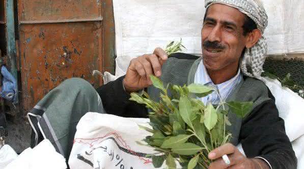 Khat entre as drogas menos viciantes do mundo