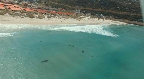 africa do Sul entre as aguas com mais tubaroes no mundo