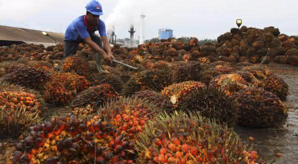 indonesia entre os maiores exportadores de alimentos do mundo
