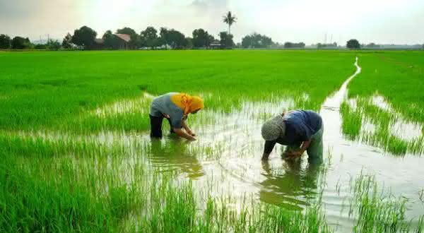 malasia entre os maiores exportadores de alimentos do mundo