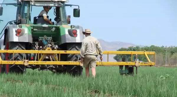 australia entre os maiores exportadores de arroz do mundo