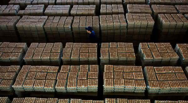 china entre os maiores paises produtores de ovos do mundo