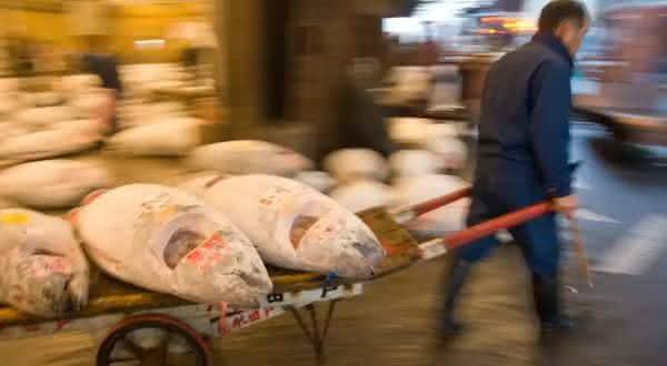 japao entre os maiores exportadores de peixes do mundo