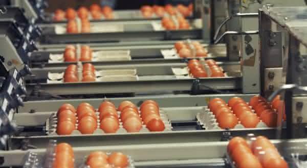 japao entre os maiores paises produtores de ovos do mundo