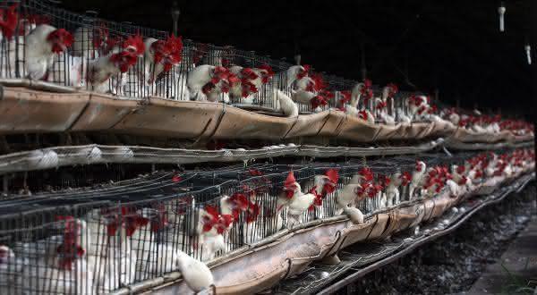mexico entre os maiores paises produtores de ovos do mundo