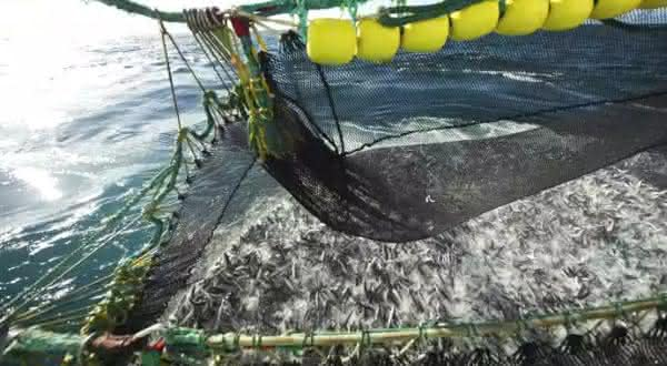noruega entre os maiores exportadores de peixes do mundo