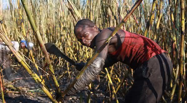 africa do sul entre os maiores exportadores de acucar do mundo