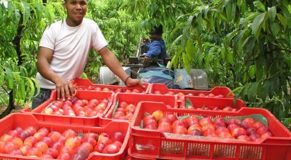 africa do sul entre os maiores exportadores de frutas do mundo