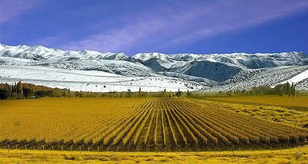 argentina entre os maiores exportadores de vinhos do mundo