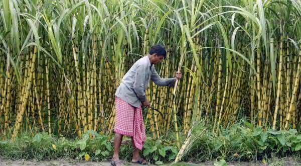 india entre os maiores exportadores de açúcar do mundo