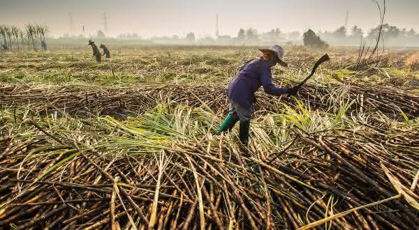 tailandia entre os maiores exportadores de açúcar do mundo