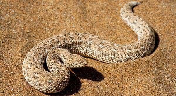 Biuta entre as cobras mais mortais do mundo