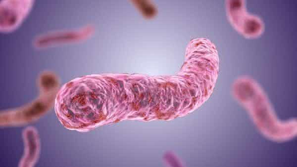 Mycobacterium Tuberculosis entre as bacterias mais perigosas do mundo