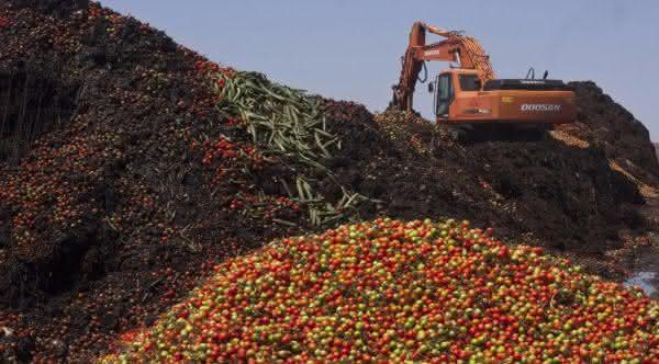 nova zelandia entre os paises com maior taxa de desperdicio de alimentos