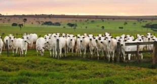 Fazendas Bartira entre as maiores fazendas do Brasil