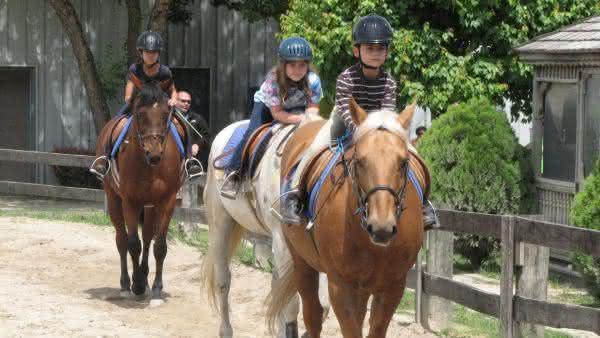 estados unidos entre os paises com mais cavalos no mundo