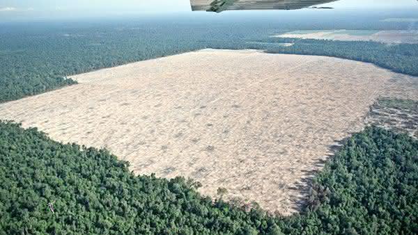 camboja entre os paises com maior taxa de desmatamento