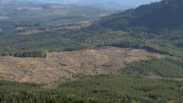 finlandia entre os paises com maior taxa de desmatamento