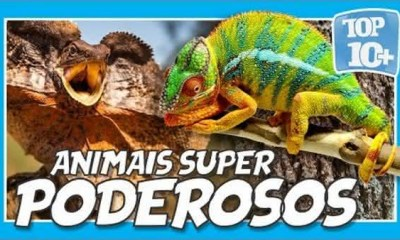 top 10 animais super poderosos