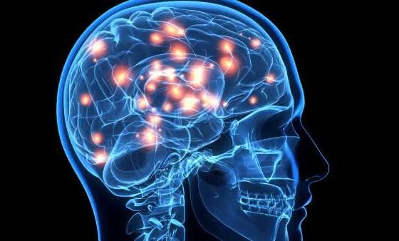 cerebro entre os orgaos mais importantes do corpo humano