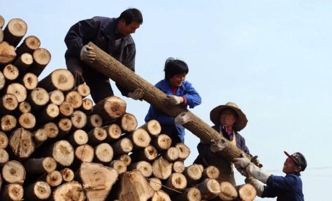 comercio ilegal de madeiras entre os crimes mais rentaveis do mundo