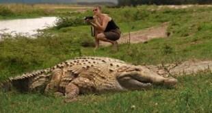 Crocodilo-do-Orinoco entre os maiores repteis do mundo