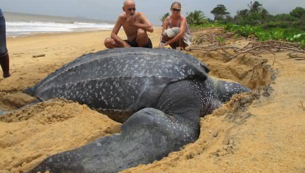 tartaruga marinha entre os maiores repteis do mundo