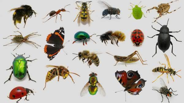 insetos entre os animais com mais pernas