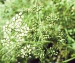 las 10 Mejores plantas medicinales