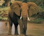 los-10-animales-mas-inteligentes - Animales más Inteligentes