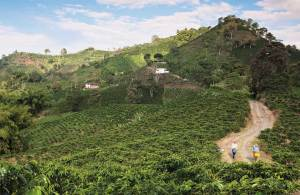 Ruta o Triángulo del Café Caldas Quindío y Risaralda mejores lugares turísticos de Colombia