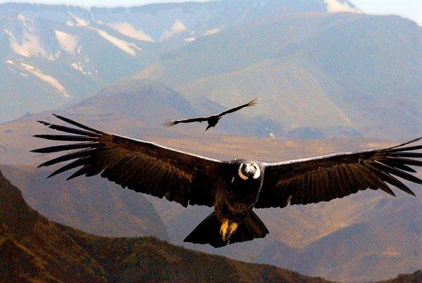 Топ-10 Самые высоко летающие птицы мира