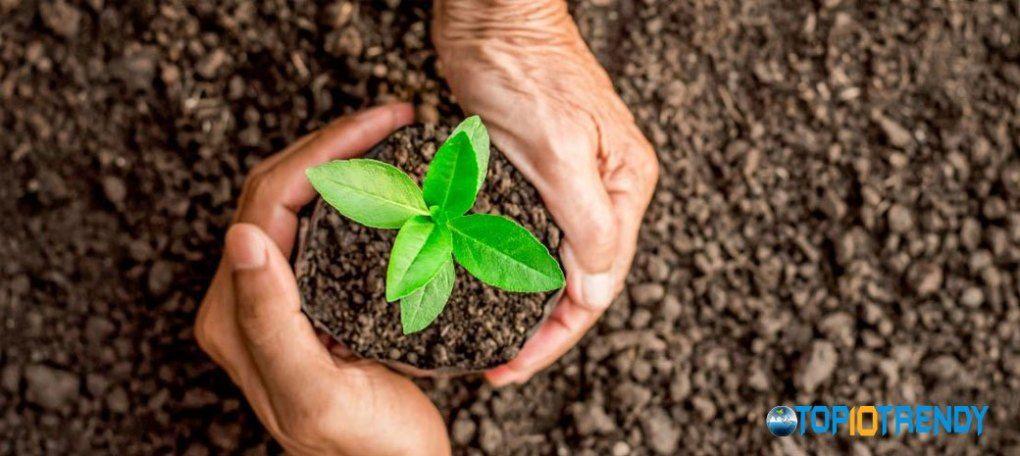 Always plant disease resistant plants