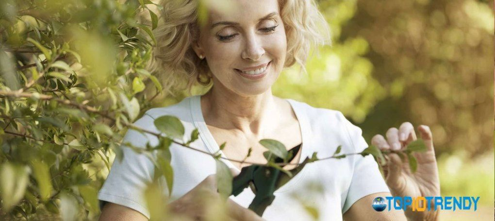 Prune the plant at the right time