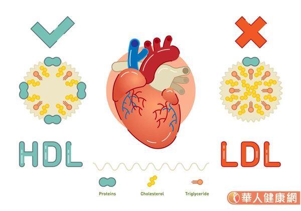 其實人體內的膽固醇又可分為,好的膽固醇—高密度脂蛋白膽固醇(HDL-C)以及壞膽固醇—低密度脂蛋白膽固醇(LDL-C)2種。
