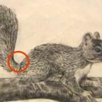 Смяташ, че това е рисунка на катерица! Погледни пак!