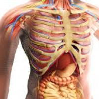 6 органа, без които човек може да си живее спокойно