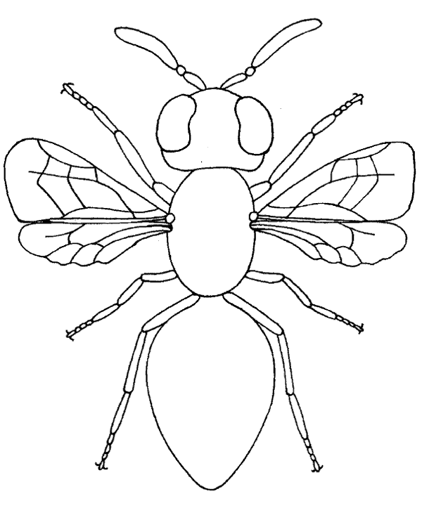 High Quality Flying Insect Housefly Coloring Book To Print